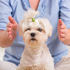 Animal Massage Insurance